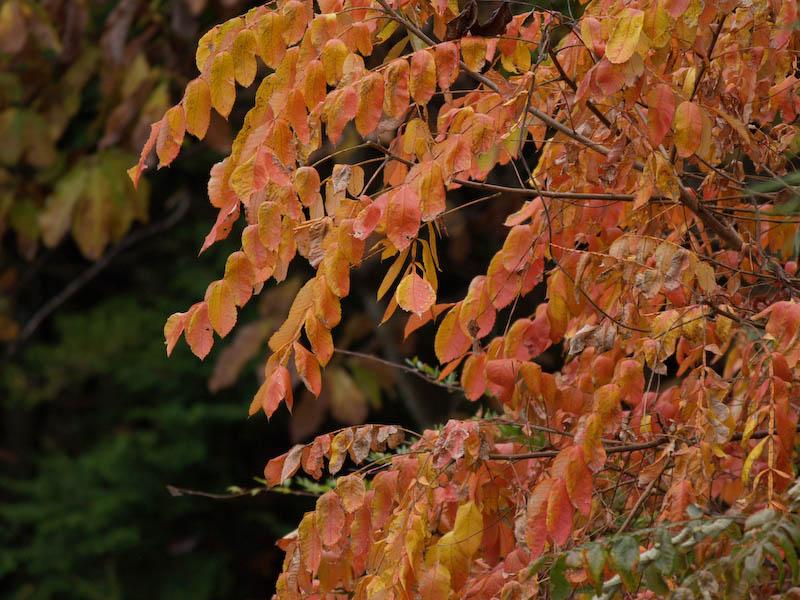 秋の海岸寺を色んなレンズで楽しみました、APO-LANTHAR 180mm 編_c0137403_19185488.jpg