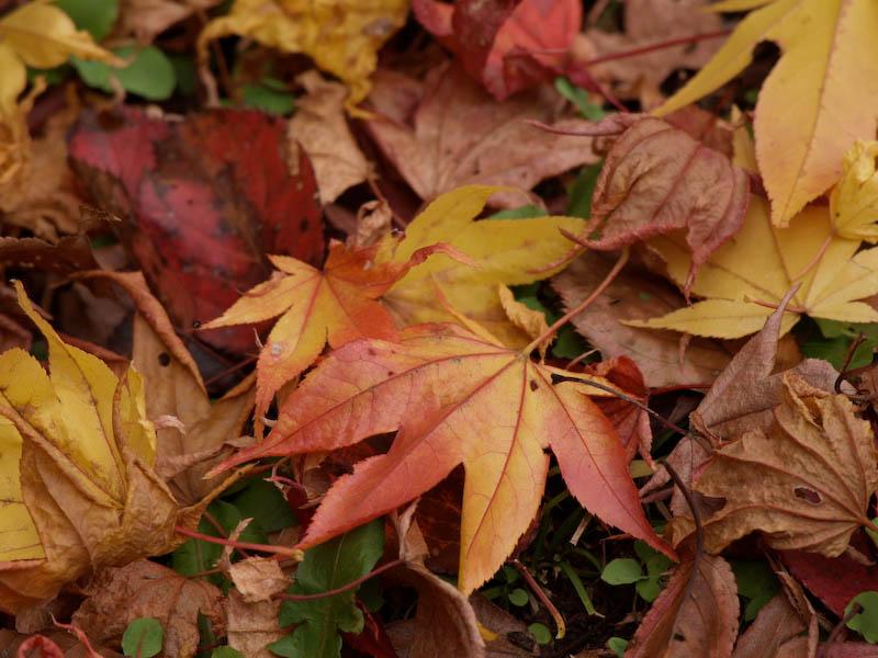 秋の海岸寺を色んなレンズで楽しみました、APO-LANTHAR 180mm 編_c0137403_19191416.jpg