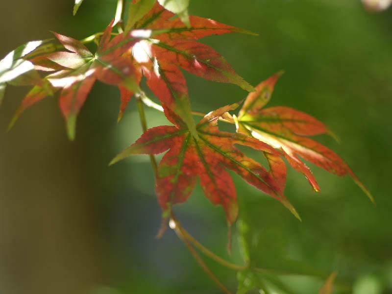 秋の海岸寺を色んなレンズで楽しみました、FA77mmF1.8 Limited編_c0137403_19291815.jpg