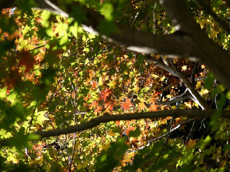 秋の海岸寺を色んなレンズで楽しみました、FA77mmF1.8 Limited編_c0137403_1929229.jpg