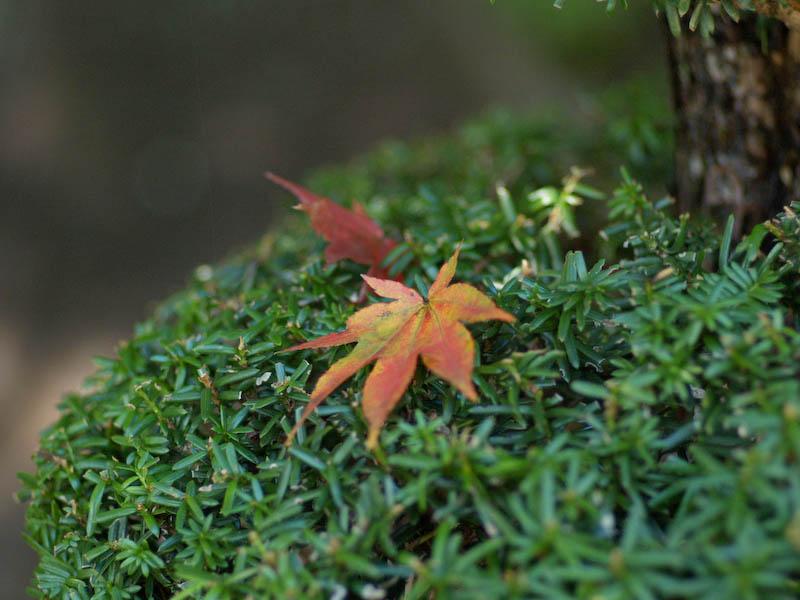 秋の海岸寺を色んなレンズで楽しみました、FA77mmF1.8 Limited編_c0137403_1930244.jpg