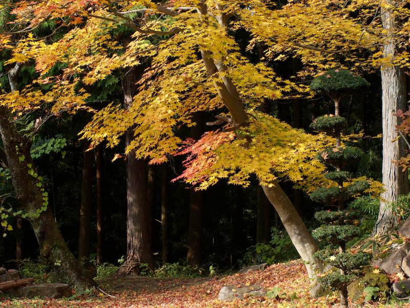 秋の海岸寺を色んなレンズで楽しみました、FA 43mmF1.9Limited編_c0137403_1941130.jpg
