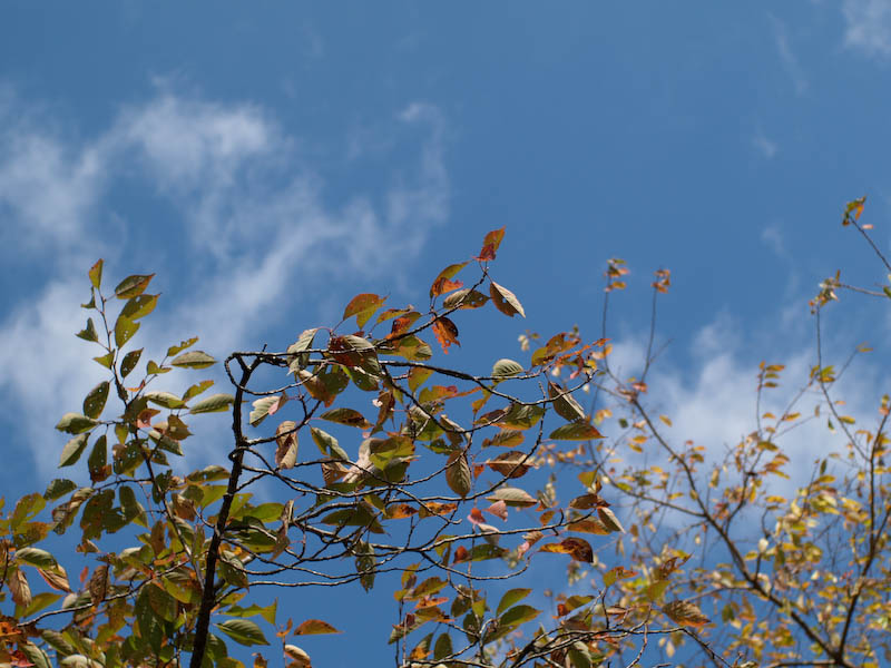 秋の海岸寺を色んなレンズで楽しみました、FA 43mmF1.9Limited編_c0137403_19425660.jpg
