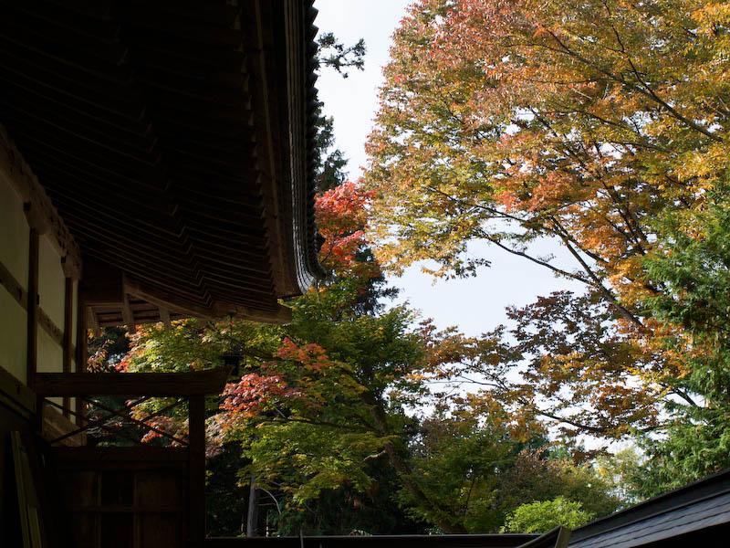 秋の海岸寺を色んなレンズで楽しみました、FA 43mmF1.9Limited編_c0137403_19431961.jpg