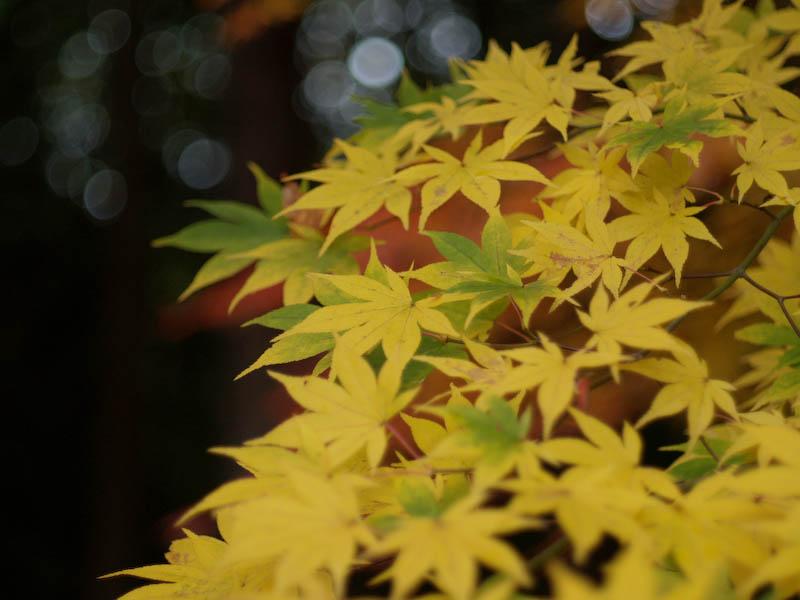 秋の海岸寺を色んなレンズで楽しみました、RIKENON 50mmF2編_c0137403_19523218.jpg
