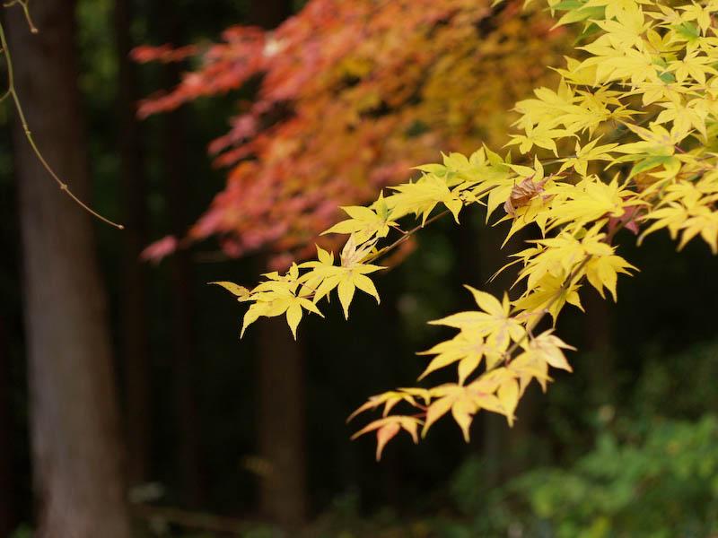 秋の海岸寺を色んなレンズで楽しみました、RIKENON 50mmF2編_c0137403_1952414.jpg