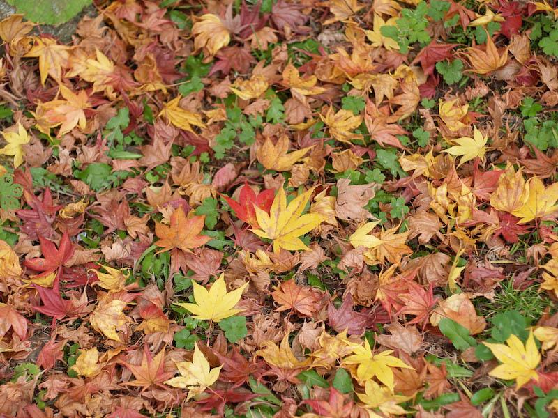 秋の海岸寺を色んなレンズで楽しみました、RIKENON 50mmF2編_c0137403_19524528.jpg