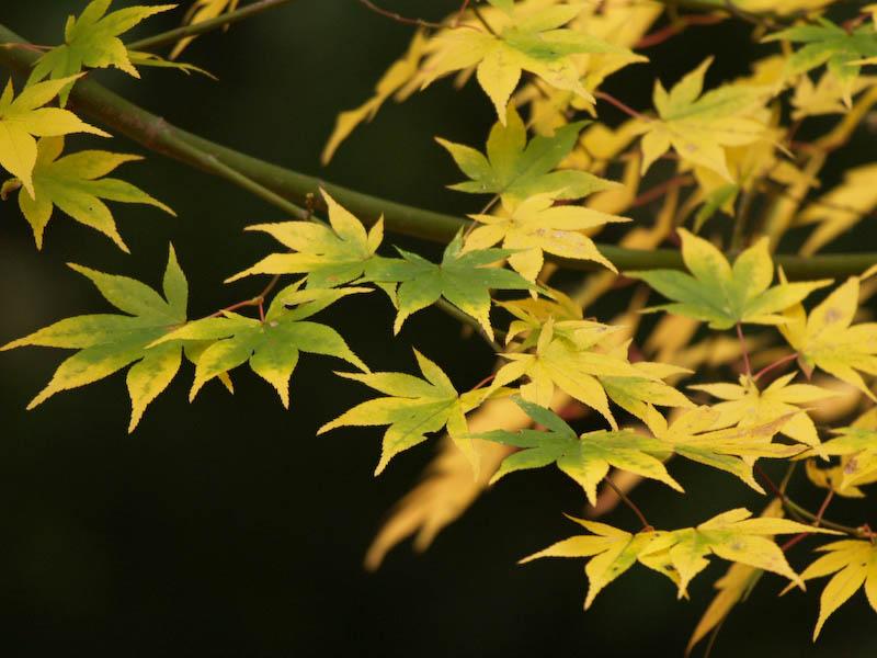 秋の海岸寺を色んなレンズで楽しみました、APO-LANTHAR 180mm 編_c0137403_199319.jpg
