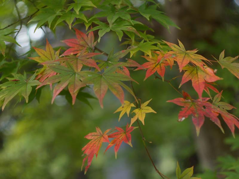秋の海岸寺を色んなレンズで楽しみました、MD ROKKOR  50mmF1.4編_c0137403_20552349.jpg