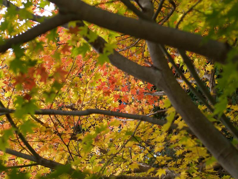 秋の海岸寺を色んなレンズで楽しみました、MD ROKKOR  50mmF1.4編_c0137403_2058267.jpg