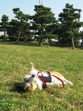 yummy とデート~城南島海浜公園①~_f0155118_22412665.jpg