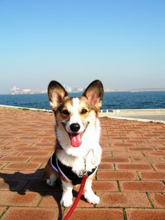 yummy とデート~城南島海浜公園①~_f0155118_22441413.jpg