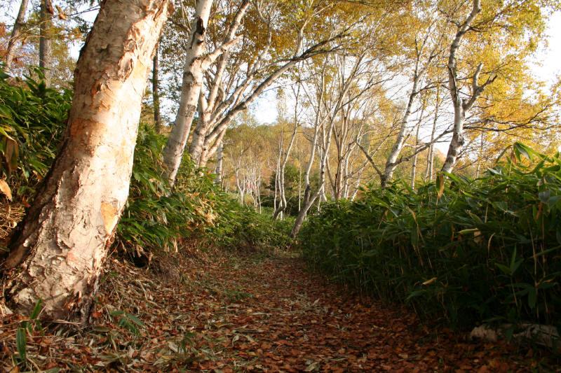 志賀高原を歩く-9_f0017530_1918780.jpg