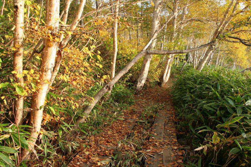 志賀高原を歩く-9_f0017530_19363167.jpg