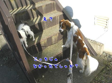 d0013149_10252059.jpg