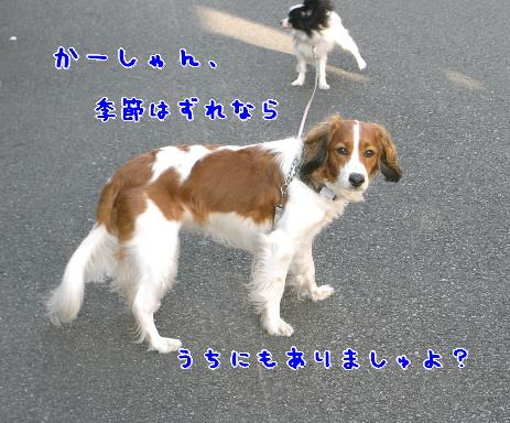 d0013149_10383086.jpg