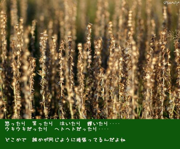 c0144353_1159465.jpg