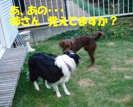 b0003270_12443170.jpg
