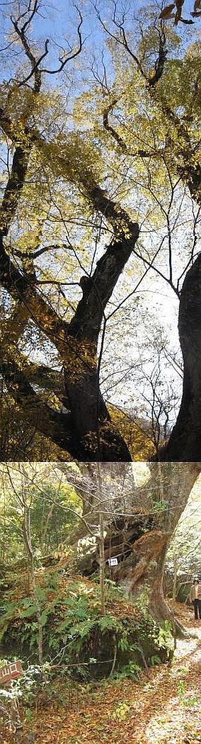 """深秋の""""源流""""紀行(その2)・・・黒岳原生林_c0001578_417671.jpg"""