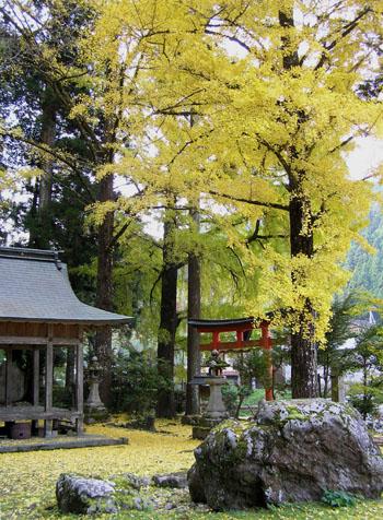 落葉神社_e0048413_22584893.jpg