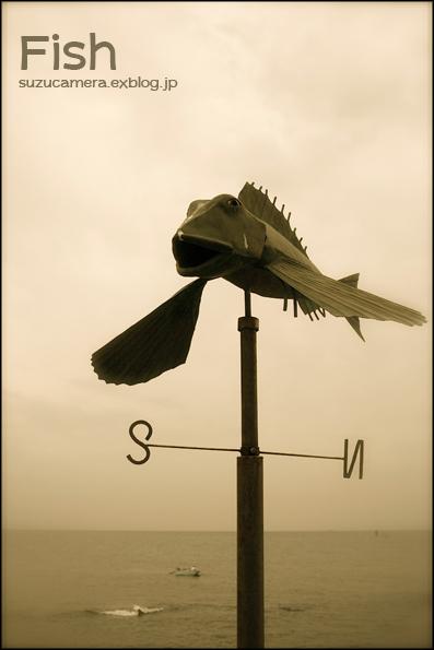 風見魚_f0100215_22145127.jpg