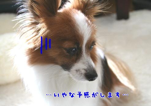 d0013149_1093912.jpg