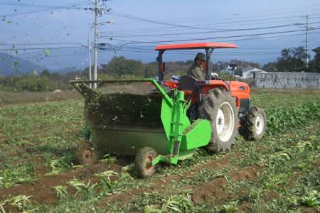 地元中津川市で「ちこり芋」の収穫開始_d0063218_20205019.jpg