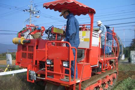 地元中津川市で「ちこり芋」の収穫開始_d0063218_20261849.jpg