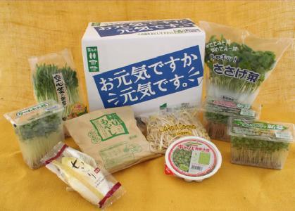 お元気ですか?元気です。冬季限定新鮮スプラウト(発芽野菜)セット出荷開始。_d0063218_21531023.jpg