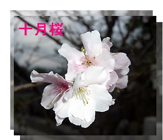 f0031546_9209100.jpg
