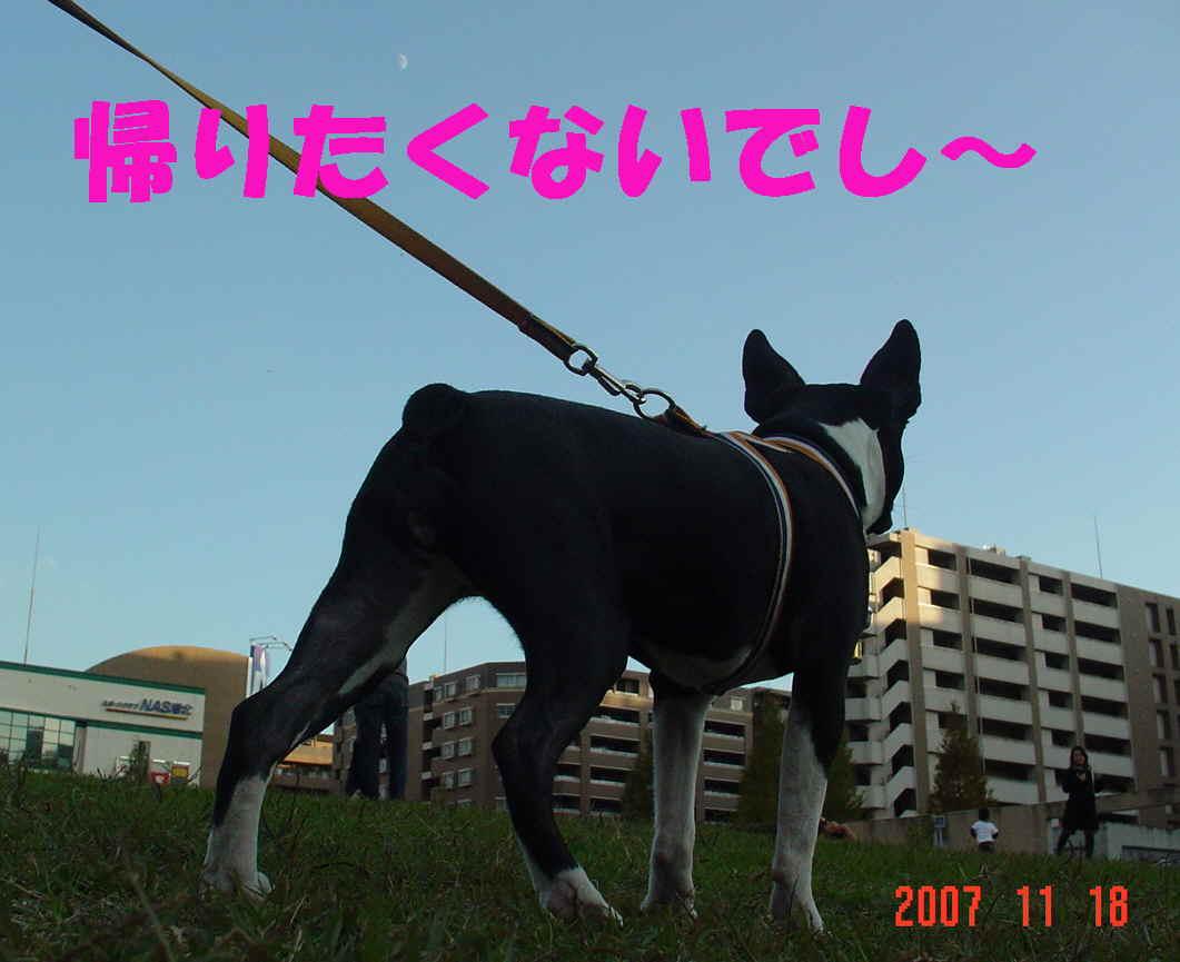 a0107355_2044524.jpg