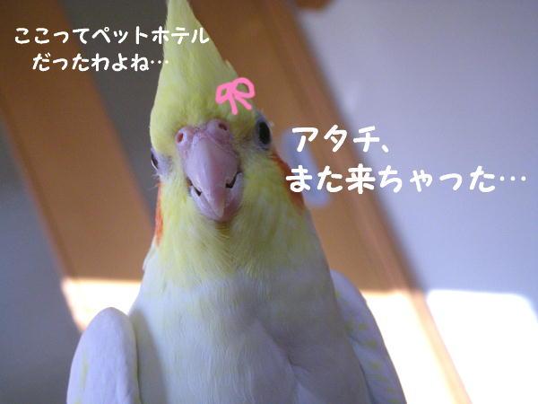 f0132055_924455.jpg