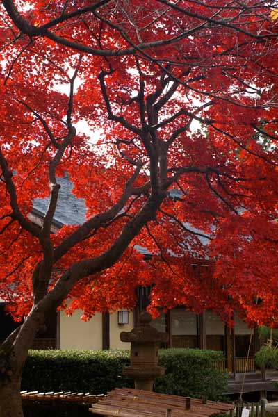 山形の紅葉〜もみじ公園〜_e0084756_0415382.jpg
