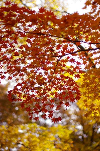 山形の紅葉〜もみじ公園〜_e0084756_0492089.jpg