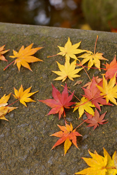 山形の紅葉〜もみじ公園〜_e0084756_1182117.jpg