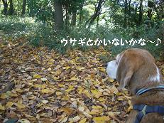 b0098660_20101219.jpg