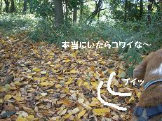 b0098660_20102118.jpg