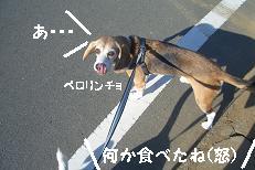 b0098660_20144674.jpg