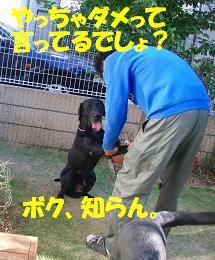 困ったちゃん!_b0003270_20444959.jpg