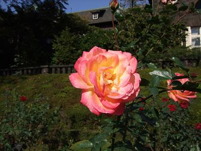 b0102675_18495799.jpg