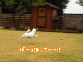 f0129214_13585519.jpg