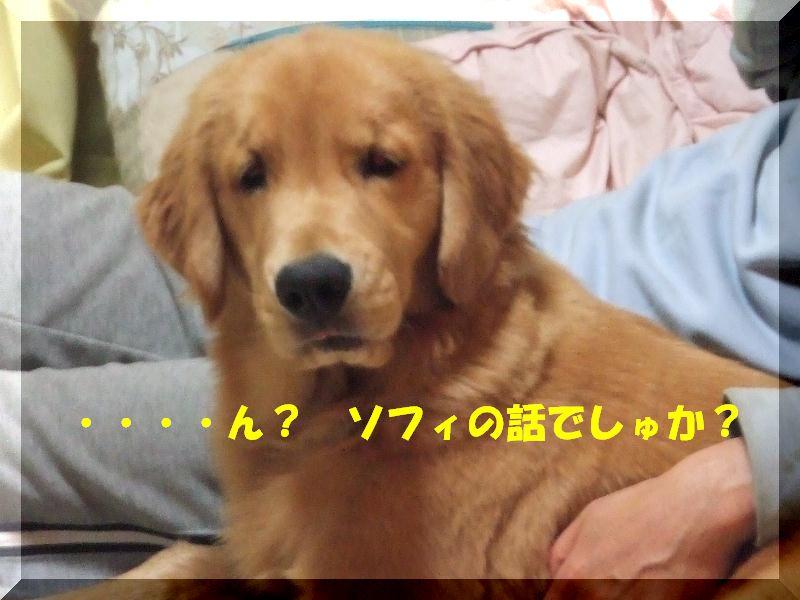 a0105425_23235276.jpg