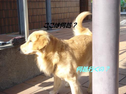 2007年秋 清里にて NO1_f0114128_15544989.jpg