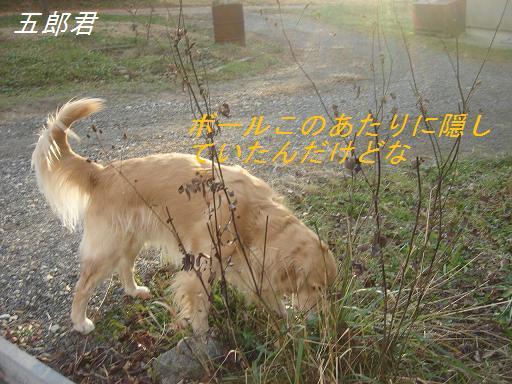 2007年11月18日 清里にて NO2_f0114128_2055364.jpg