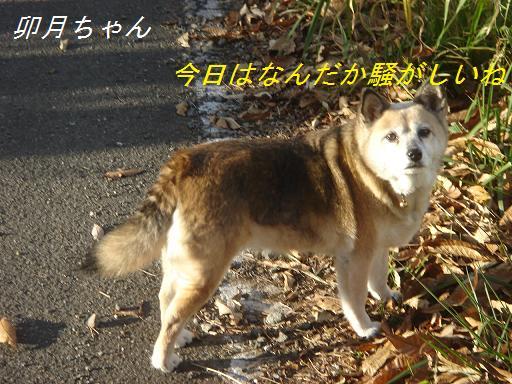 2007年11月18日 清里にて NO2_f0114128_210153.jpg