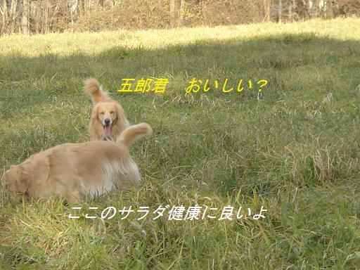 2007年11月18日 清里にて NO2_f0114128_21132738.jpg
