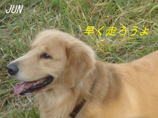 2007年11月18日 清里にて NO2_f0114128_2143588.jpg
