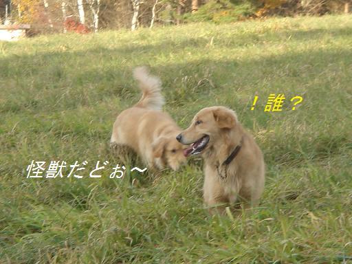 2007年11月18日 清里にて NO2_f0114128_2191747.jpg