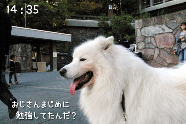 冒険散歩~行きはヨイヨイ編~_c0062832_1650373.jpg