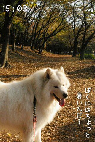 冒険散歩~行きはヨイヨイ編~_c0062832_16505468.jpg
